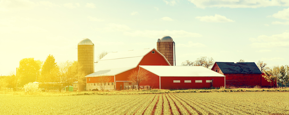 Happy Farm With Red Barns During Sunset
